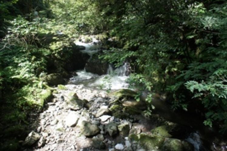 【神庭の滝】滝へ行く途中の風景です。涼しくて気持ちいい!