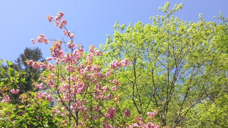 *春/野山に花が咲き誇ります!
