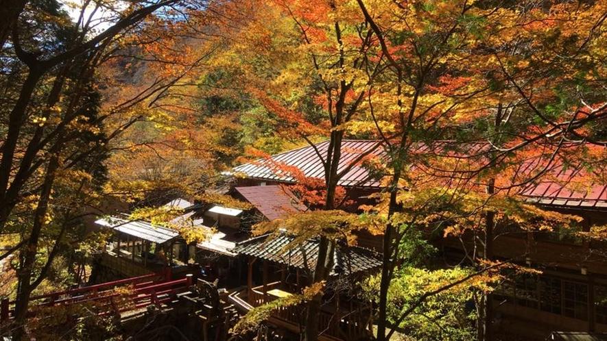 *秋外観/紅葉に染まった一面の木々に包まれます。