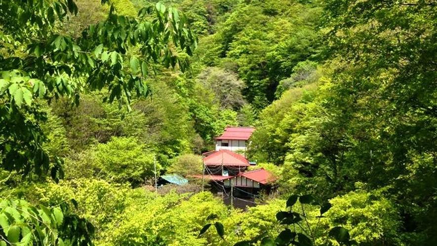 *風がそよぎ、木々が揺れ、川のせせらぎが流れる…。自然と共に過ごせる宿が、金湯館です。