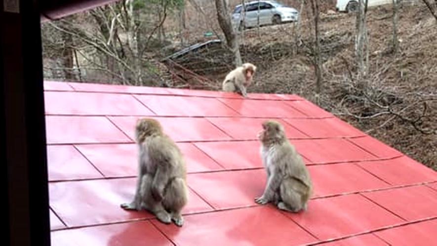 *サルなどの野生動物にも出会える!