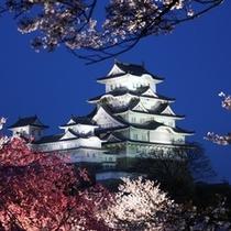 【姫路城】姫路城と夜桜(2)