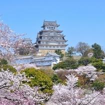 【姫路城】春=姫路城と桜