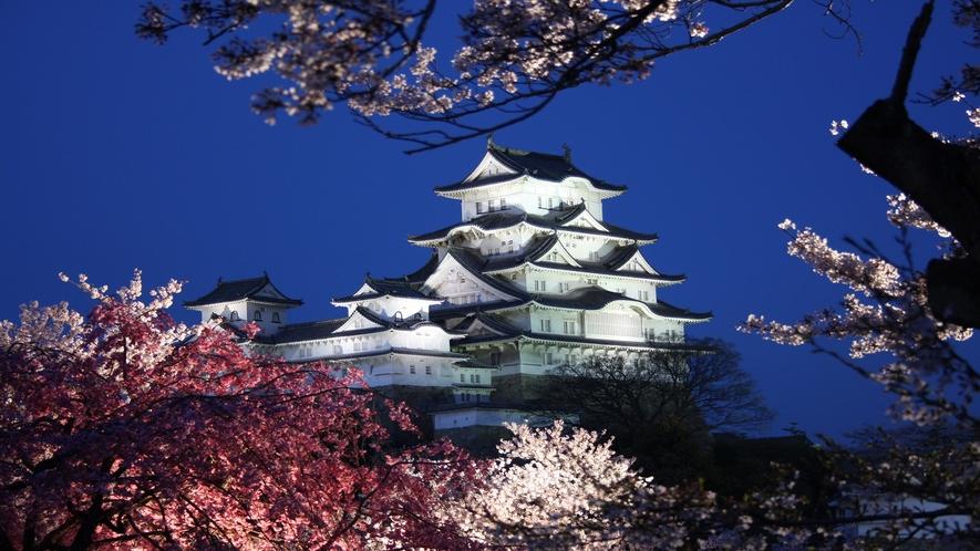【姫路城】姫路城と夜桜
