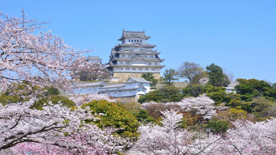 【姫路城】春 姫路城と桜