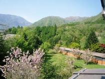 当館裏庭の風景