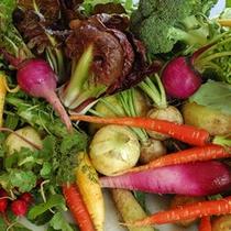*【食材】色鮮やかな野菜の数々♪見ているだけで心が弾みます。