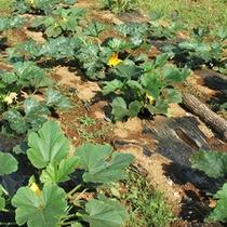 *【自家菜園】安心安全な食材をご提供したいという思いから…野菜や果物を自家栽培しております。