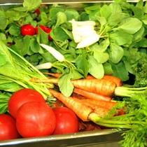*【食材】新鮮な朝採れ野菜を使って、お食事をご用意致します!