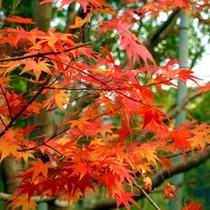 *【秋】紅葉狩りに出かけよう!