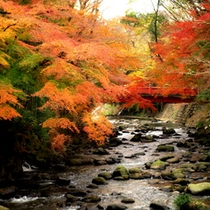 *【秋】伊豆修善寺の桂川にて