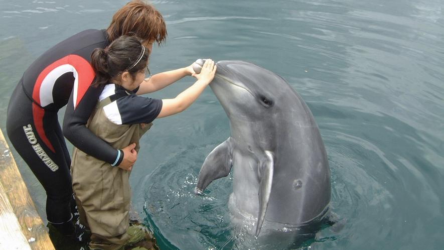 *【イルカ】ふれあい体験♪伊東の港にて行っております。