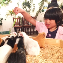 【伊豆シャボテン動物公園】動物たちとふれあえたり、エサ体験をすることができます。