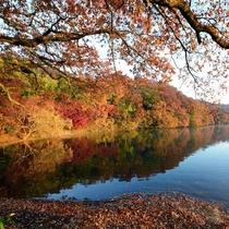 紅葉の一碧湖