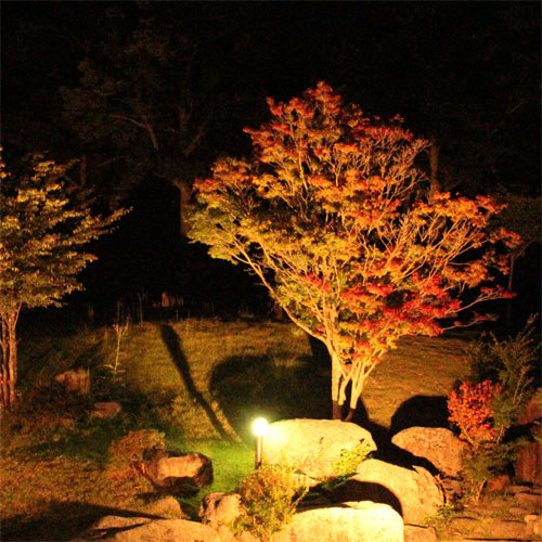 中庭の紅葉ライトアップ