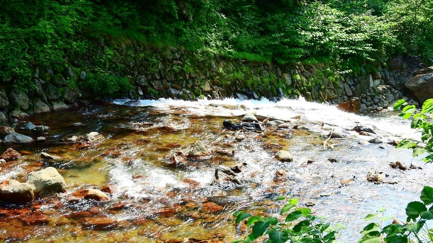 *露天風呂のすぐ前に流れる川と、色鮮やかな緑が美しく映ります。