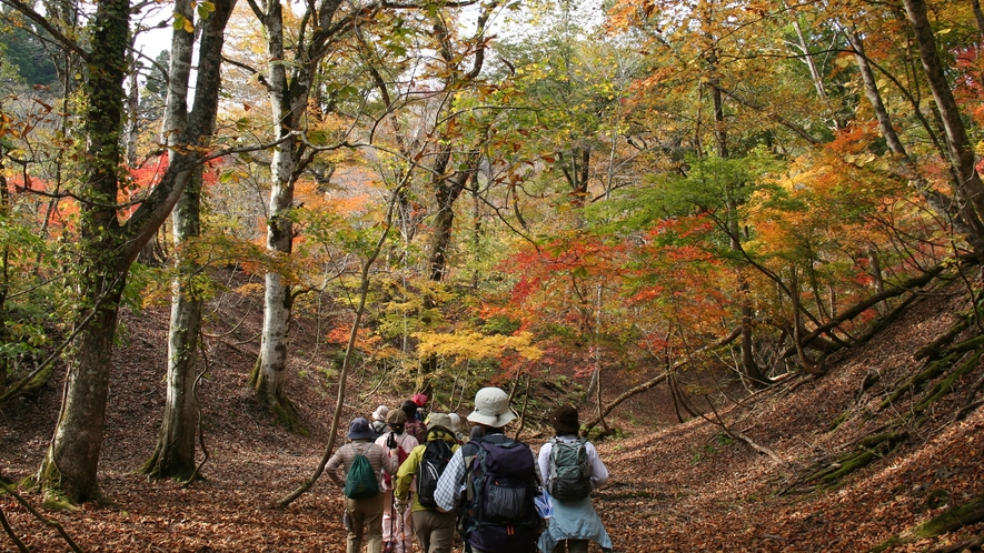 *芦生の森ネイチャーガイドハイキング