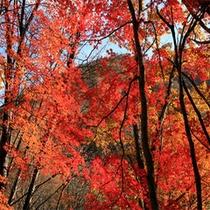 歴史ロマンと情緒溢れる。。。美しすぎる絶景の紅葉露天風呂を贅沢に味わう極上の時感(じかん)。。。