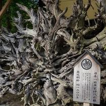 神代杉とは火山の噴火で半化石化し(約800~2500年程)埋もれていないと、この色にはなりません。