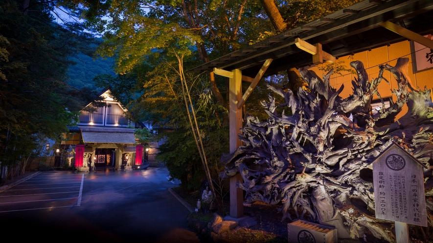 """日本一。。。巨大な""""平家神代杉根""""(推定樹齢 約1200年)が、お客様をお迎えしています。。。"""