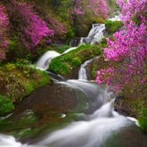 マイナスイオン大放出!神秘的な印象を与える湯西川の大自然が生んだ~四季折々の美しすぎる青い清流。。。