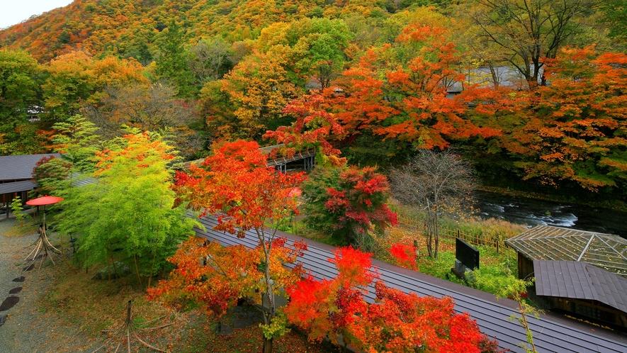 """【2018年】紅葉が美しい""""日本庭園""""33選!美しすぎる~大正初期の原型を留める貴重な眺望です。。。"""