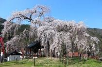 【春】泰雲寺
