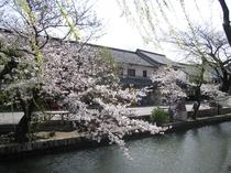 春の美観地区