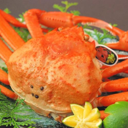 紅ガニは、鮮度が重要! 香住港は日帰り漁なので、新鮮です。