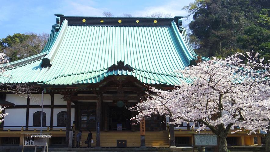 *【光明寺】春/桜の名所(車で10分・徒歩30分)