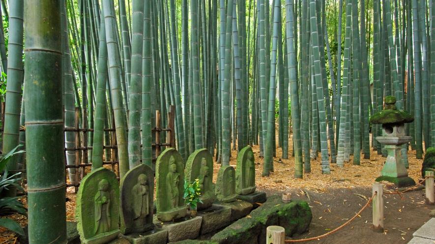 *【報国寺】美しい竹林の庭(車で15分)※写真提供:鎌倉市観光協会