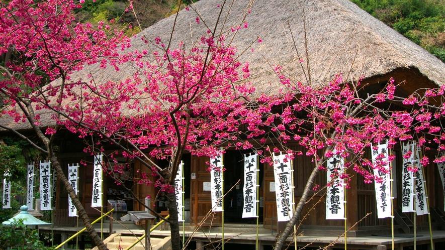 *【杉本寺】春/寒緋桜(車で15分)※写真提供:鎌倉市観光協会