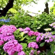 *【長谷寺】初夏/あじさい(車で2分・徒歩10分)※写真提供:長谷寺