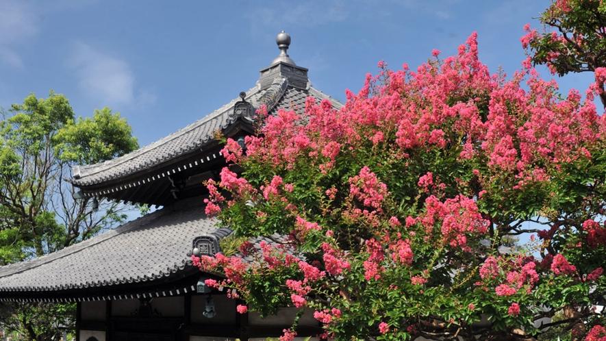 *【本覚寺】夏/樹齢100年以上の百日紅(車で10分・徒歩30分)※写真提供:鎌倉市観光協会