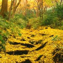 *【獅子舞の谷】秋/紅葉の名所(車で15分)※写真提供:鎌倉市観光協会