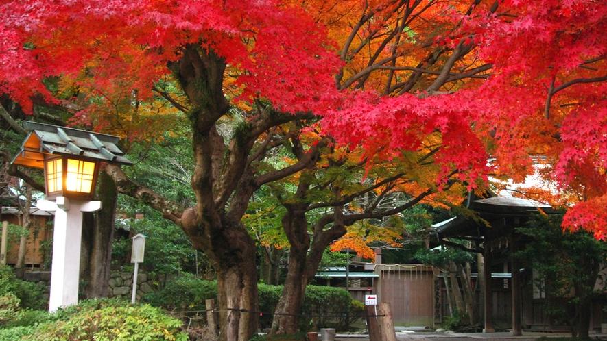 *【鎌倉宮】秋/紅葉の風景(車で15分)※写真提供:鎌倉市観光協会