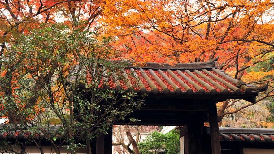 *【瑞泉寺】秋/紅葉の山門(車で15分)※写真提供:鎌倉市観光協会