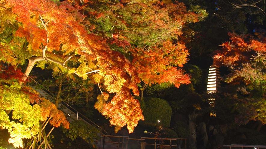 *【長谷寺】秋/紅葉の風景(車で2分・徒歩10分)※写真提供:長谷寺