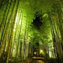 【竹林の小径】夏季にはライトアップも