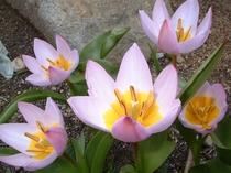敷地内の季節のお花/ミニスイレン