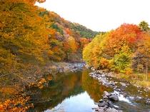 紅葉の那珂川