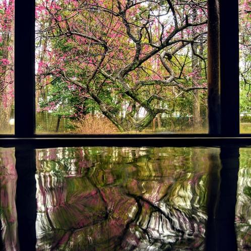 春には紅梅が見える女性大浴場。