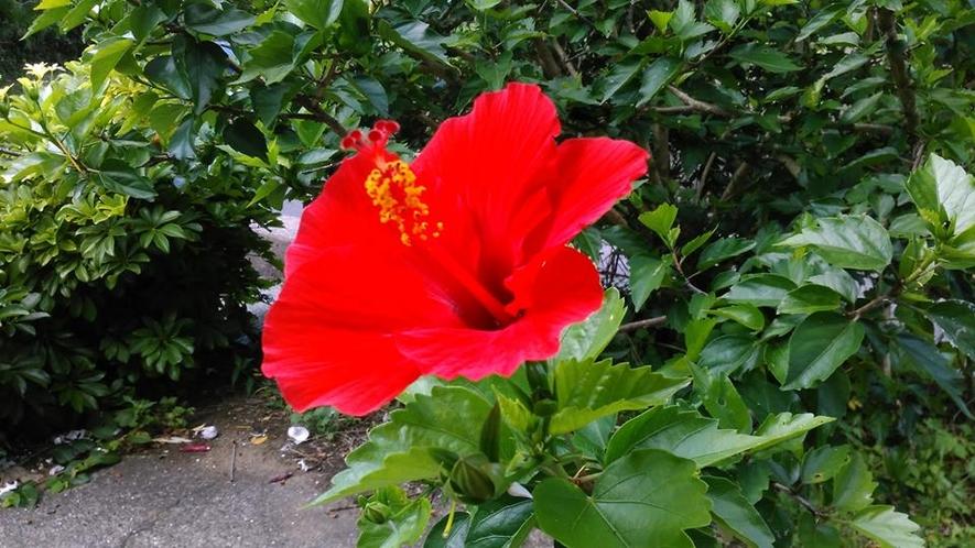 五島は季節の花でいっぱいです