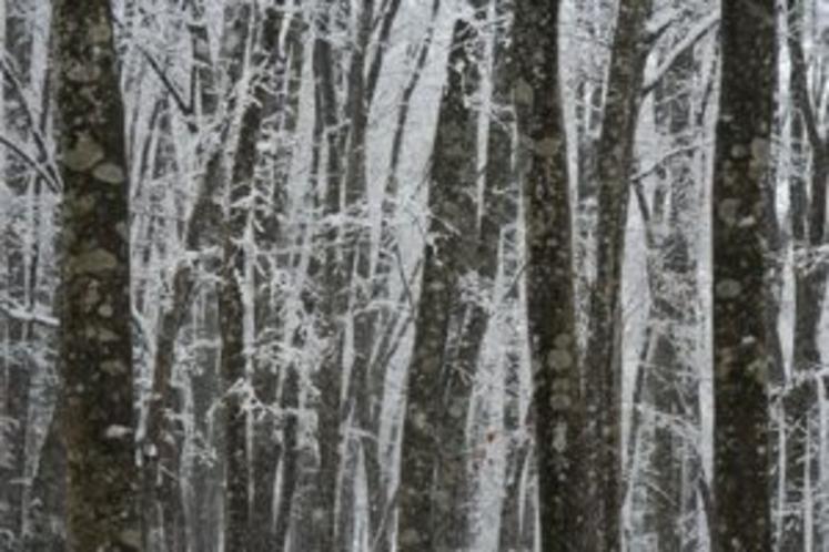 冬の美人林1