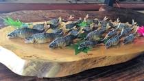 天然鮎の塩焼き