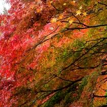 敷地内の紅葉の見頃は、11月中旬から12月上旬