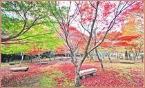昭和の森会館_紅葉
