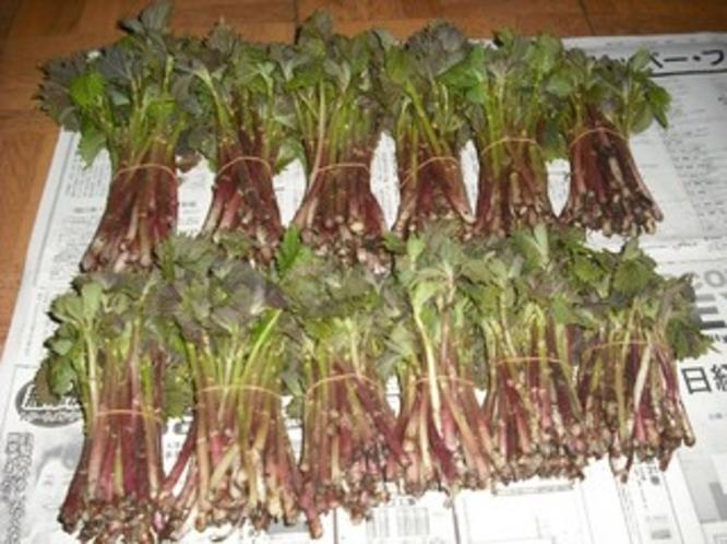 採りたての山菜の束