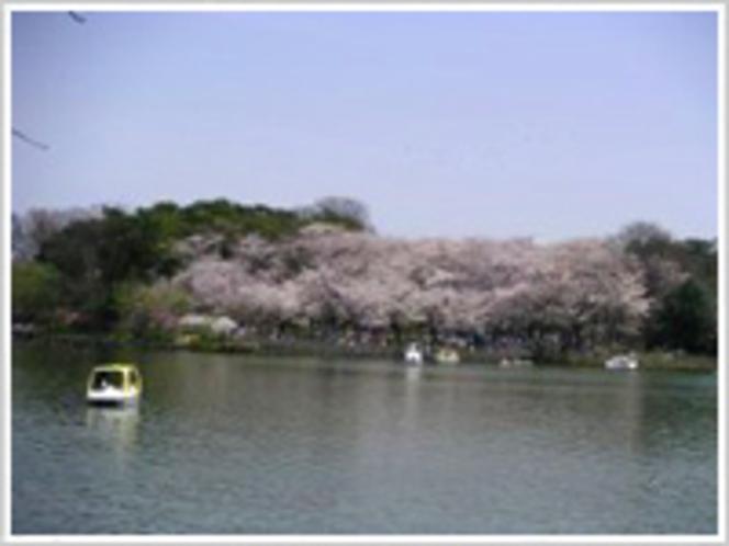 【周辺観光地】洗足池公園