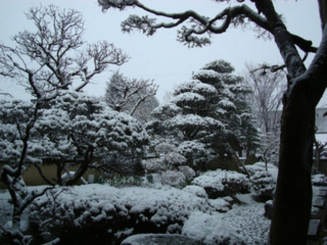 中庭のイメージ11冬